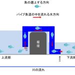 サイホン式パイブ魚道のイメージ