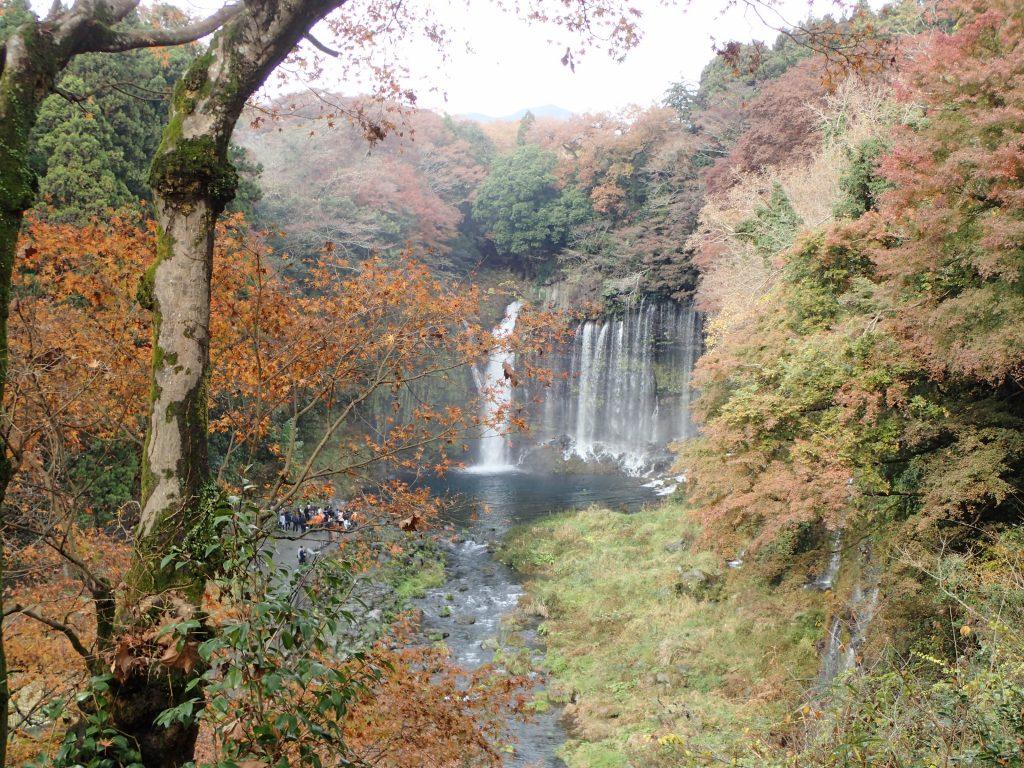 ▲富士宮の景勝地「白糸の滝」も芝川漁協の管轄。